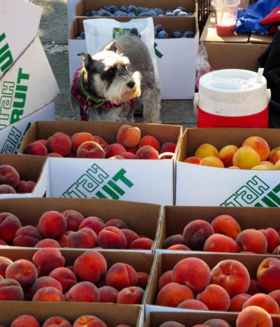 utah farmers market